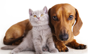 Gardiennage chiens et chats